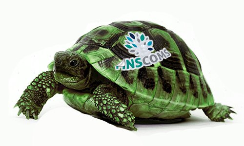 Tortoise500-1 Home Page