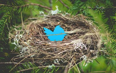 Twitternest500-400x250 The View New